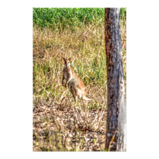 WALLABY IN RURAL QUEENSLAND AUSTRALIA STATIONERY