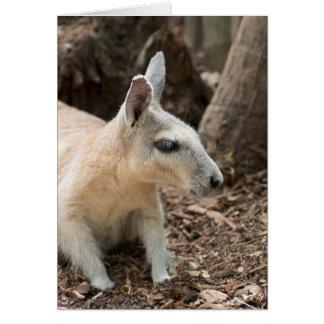 Wallaby Profile Card
