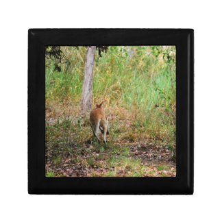 WALLABY RURAL QUEENSLAND AUSTRALIA GIFT BOXES