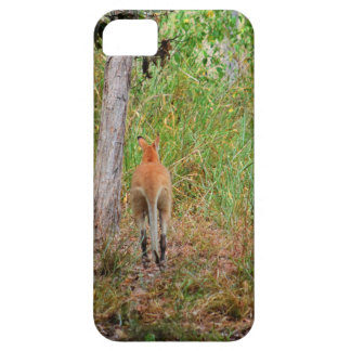 WALLABY RURAL QUEENSLAND AUSTRALIA iPhone 5 CASES