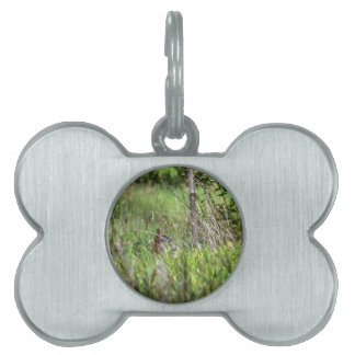WALLABY RURAL QUEENSLAND AUSTRALIA PET TAG