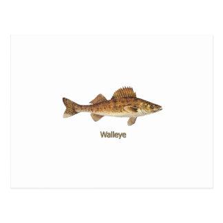 Walleye Art Postcard