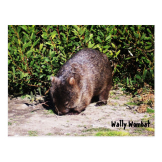 Wally Wombat Postcard