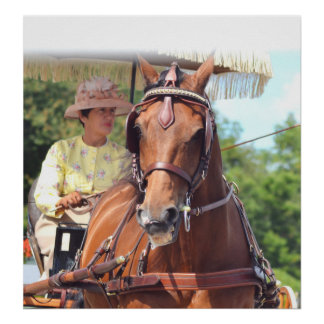 Walnut Hill Carriage Driving Horse Show Poster