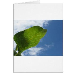 Walnut leaf lit by sunlight against the blue sky card
