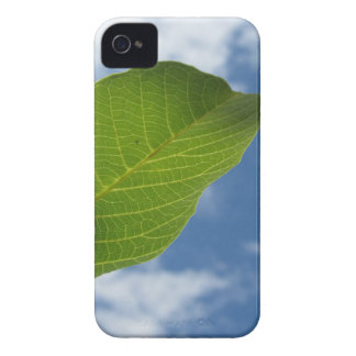 Walnut leaf lit by sunlight against the blue sky iPhone 4 case
