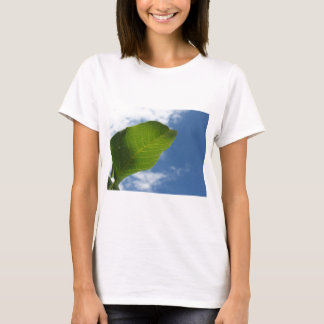 Walnut leaf lit by sunlight against the blue sky T-Shirt