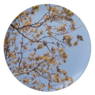 Walnut Sky Plate