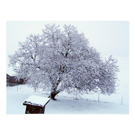 Walnut Tree After Snowfall Postcard
