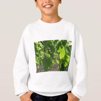 Walnut tree branches with green leaves sweatshirt
