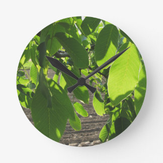 Walnut tree branches with green leaves wallclock