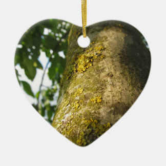 Walnut tree trunk with yellow moss fungus ceramic heart ornament