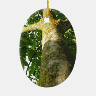 Walnut tree trunk with yellow moss fungus ceramic oval ornament