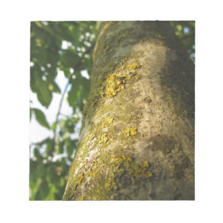 Walnut tree trunk with yellow moss fungus notepad