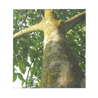 Walnut tree trunk with yellow moss fungus notepads