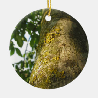 Walnut tree trunk with yellow moss fungus round ceramic ornament