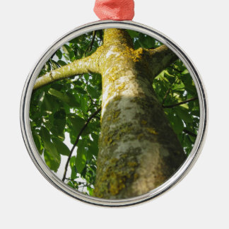 Walnut tree trunk with yellow moss fungus Silver-Colored round ornament