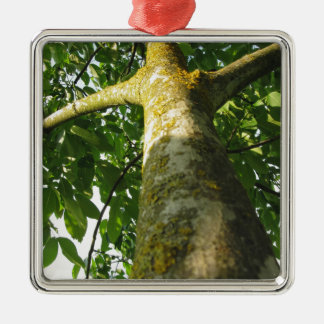Walnut tree trunk with yellow moss fungus Silver-Colored square ornament