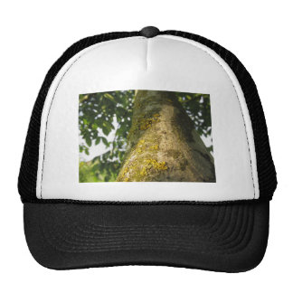 Walnut tree trunk with yellow moss fungus trucker hat