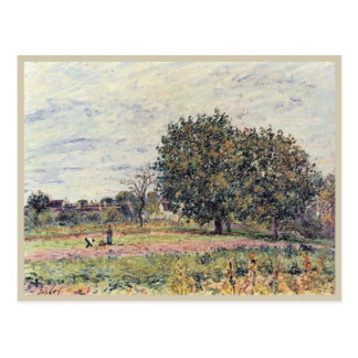 Walnut trees at sunset in early October postcard