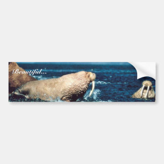 Walrus Bumper Sticker