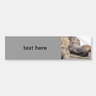 Walrus Car Bumper Sticker