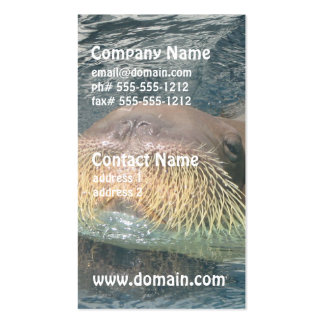 Walrus Face Business Cards