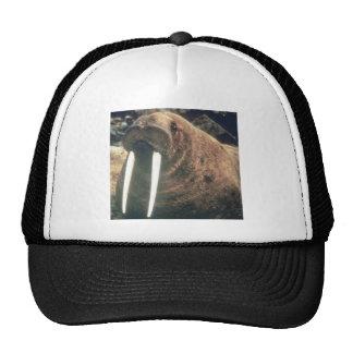 Walrus Trucker Hats