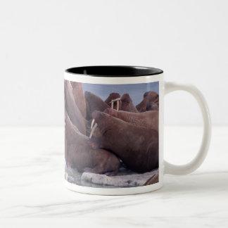 walrus, Odobenus rosmarus, on the pack ice of Two-Tone Coffee Mug