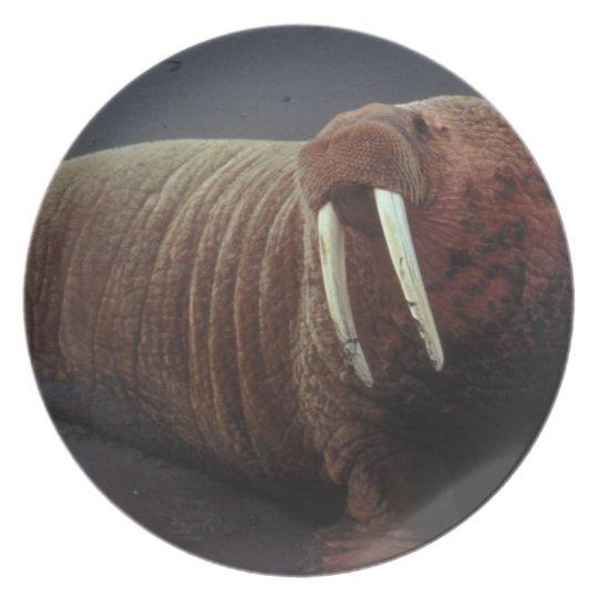Walrus Plate