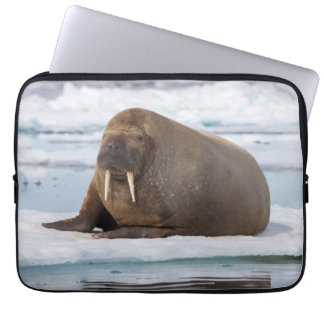 Walrus resting on ice, Norway Laptop Sleeve