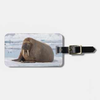 Walrus resting on ice, Norway Luggage Tag