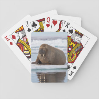 Walrus resting on ice, Norway Playing Cards