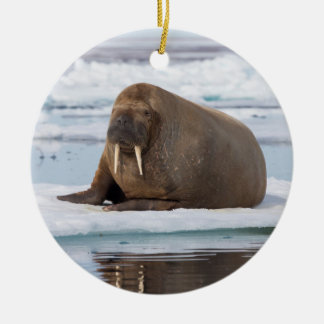Walrus resting on ice, Norway Round Ceramic Ornament
