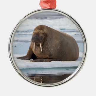Walrus resting on ice, Norway Silver-Colored Round Ornament