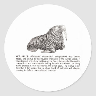 walrus round sticker