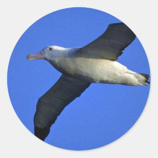 Wandering Albatross In Flight Round Sticker