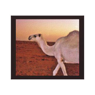 Wandering Camel Canvas Print