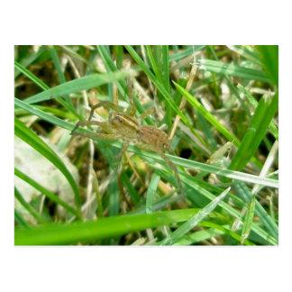Wandering Spider in Grass Postcard