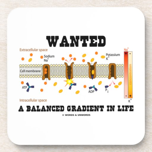 Wanted A Balanced Gradient In Life (Na-K Pump) Beverage Coasters