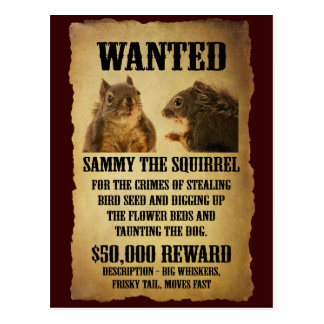 Wanted Poster with Squirrel Postcard