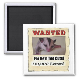 wanted sugar glider magnet