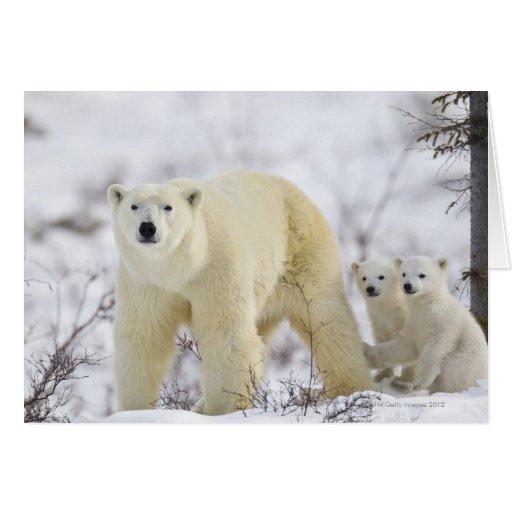 Wapusk National Park, Canada. Greeting Cards