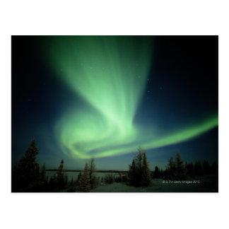 Wapusk National Park Postcard
