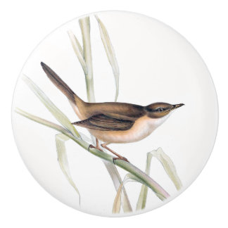 Warbler Bird Wildlife Animal Habitat Knob