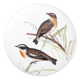 Warbler Birds Wildlife Animal Habitat Knob