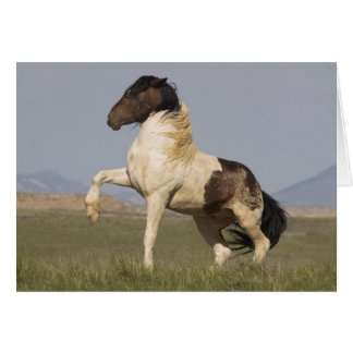 Warbonnet's Challenge Wild Horse Greeting Card