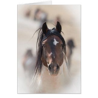 Warbonnet's Pride Wild Horse Greeting Card