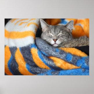 . Warm & fuzzy kitten Poster