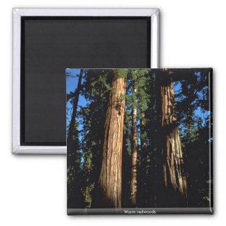 Warm redwoods magnet